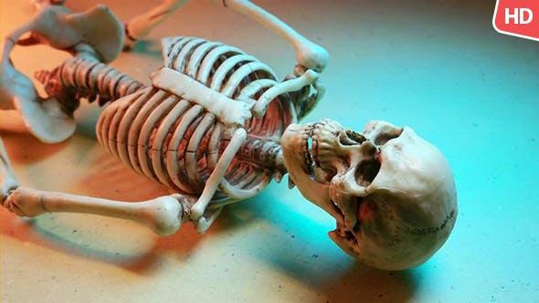 Thumbnail for Human Skeleton 0184