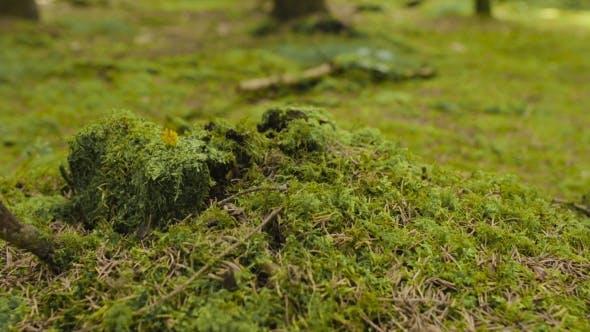 Beetle Crawling On Moss
