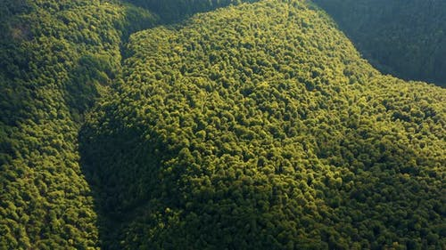 Flyover Amazon Jungle. Aerial view of Tropical Rainforest in Amazon. Flying above Jungle.