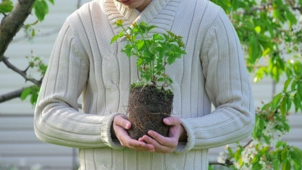 Thumbnail for Male Hands Holding Plant