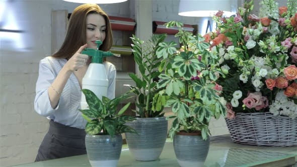 Thumbnail for Female Florist Watering Plants At Flower Shop