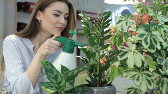 Thumbnail for Female Florist Sprays Water on Houseplants at Flower Shop