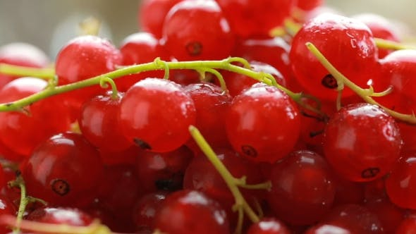 Thumbnail for Red Currant Berry