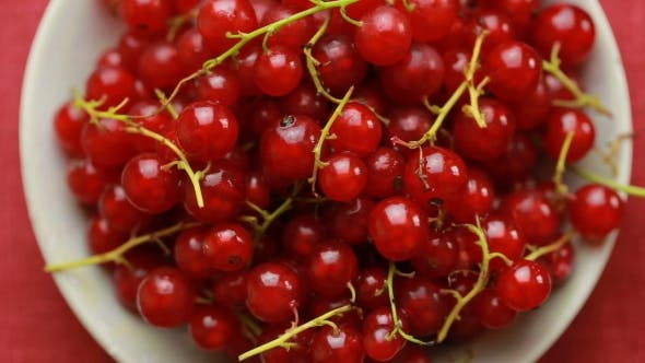 Thumbnail for Red Currant Berry Rotation