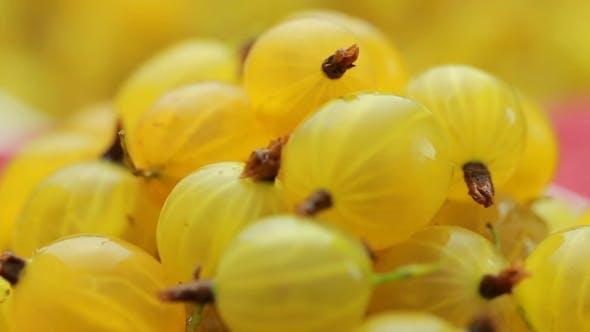 Thumbnail for Solar Berry Gooseberries Rotation