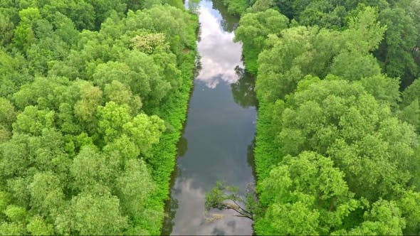 Thumbnail for Aerial Shot Of Calm River Amidst Trees