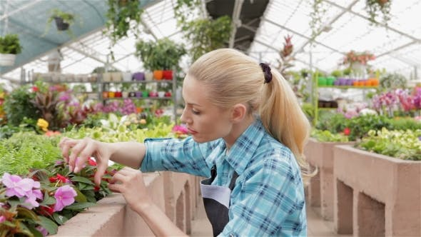 Thumbnail for Female Florist Examines Leaves And Flowers Of The Plants At The Garden Centre