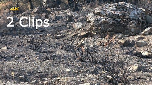 Verbrannter Wald Foor