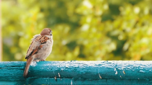 Cover Image for Sparrow Sitting On The Railing Of The Balcony