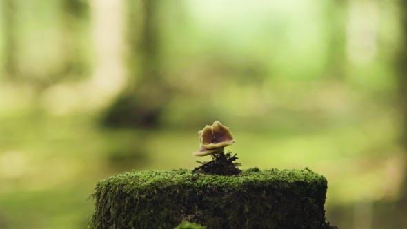Thumbnail for Mushroom At The Tree Stump