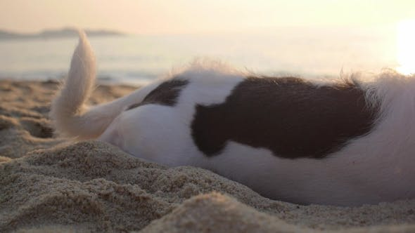 Thumbnail for On Pet Dog Resting On a Beach By Sea At Sunset