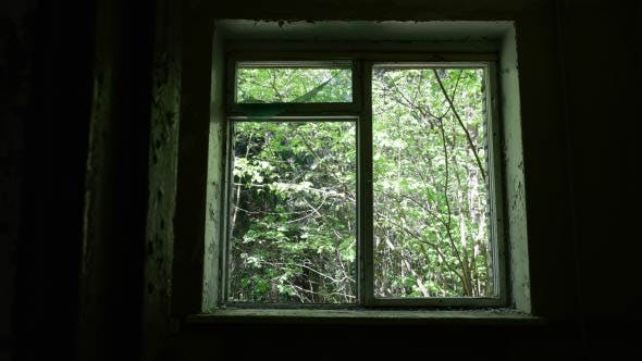 Thumbnail for Window in the Deserted Hospital