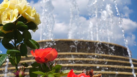Thumbnail for Fountain Waterfall and Roses