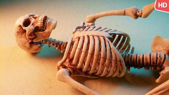Thumbnail for Human Skeleton 0177