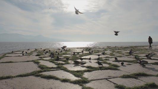 Thumbnail for Feeding Pigeons At Seaside