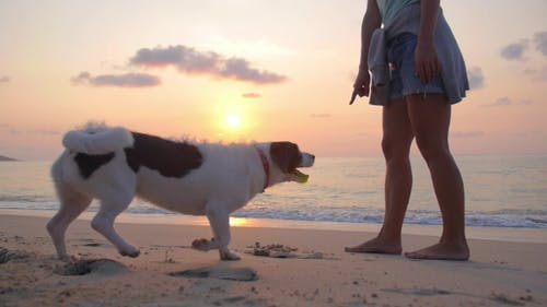 Obedient Dog Follows The Order Of Owner. Girl And Dog On Beach