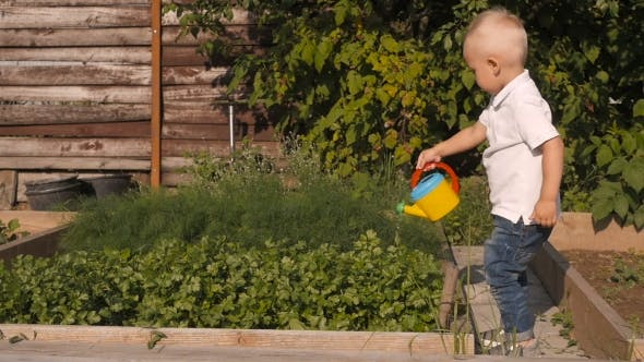 Thumbnail for Cute Little Boy Waters Greenery From a Garden Watering Can. Little Gardener Concept