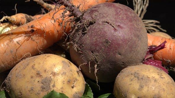 Thumbnail for Vegetables