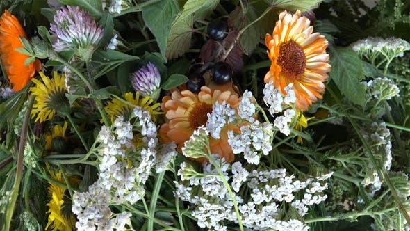 Thumbnail for Medicinal Herbs