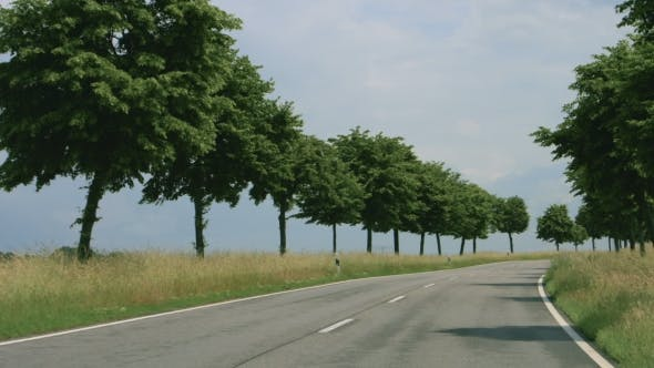 Thumbnail for Road With Trees in Germany