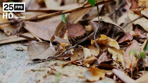 Thumbnail for Termites 04