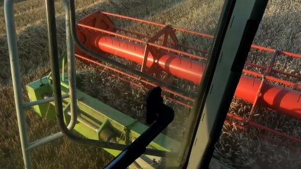 Thumbnail for Combine Harvester Treshing Wheat Cutterbars