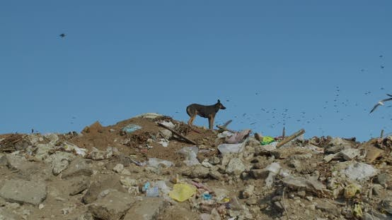 Cover Image for Stray Dog. Mountains of Garbage. City Dump.