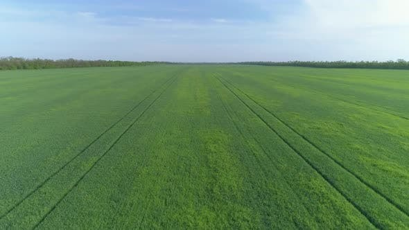 Thumbnail for Flying Over Green Agriculture Fields in Spring