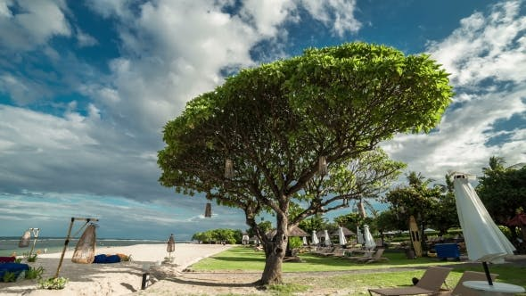 Thumbnail for The Big Tree And The Sun Loungers On The White Sandy Beach Of Nusa Dua.   - Bali, Indonesia, June