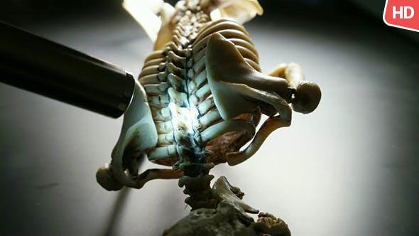 Thumbnail for Human Skeleton 0236