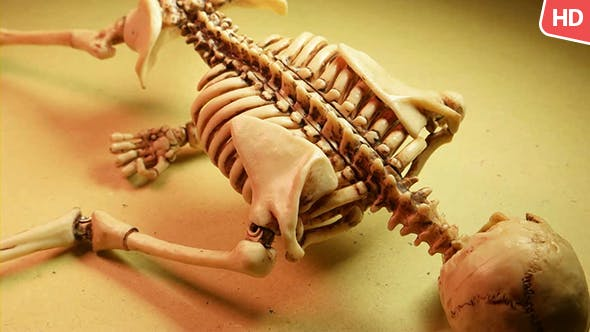Thumbnail for Human Skeleton 0188