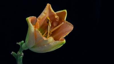 Flower Flowering