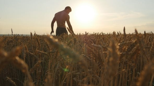Thumbnail for Male Hand Moving Over Wheat Growing On The Field. Young Man Running Through Wheat Field