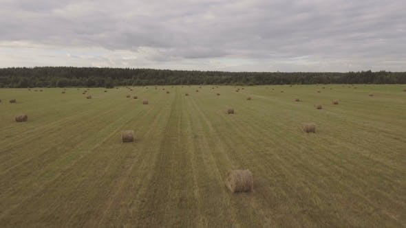 Thumbnail for Rolls Of Haystacks On The field.Aerial Video.