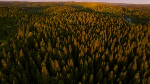 View From a Height Of Forest In Sunset Time