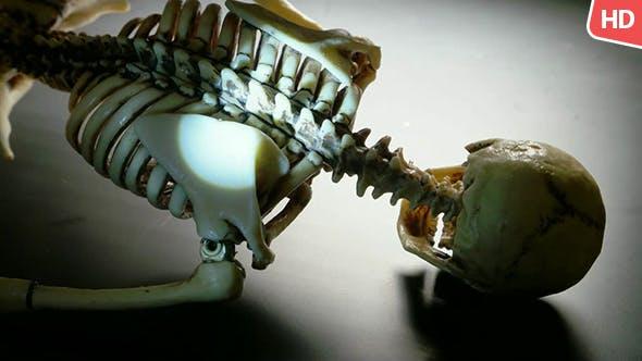 Thumbnail for Human Skeleton 0234
