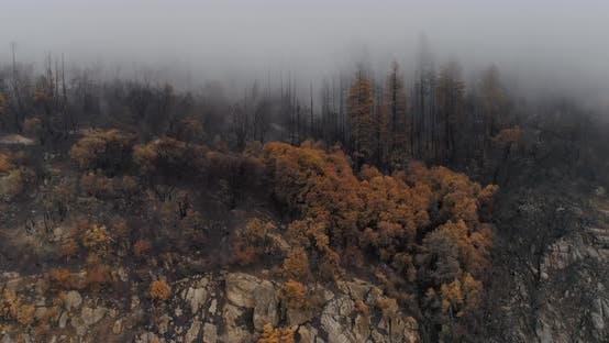 Thumbnail for A High-terrain Area Dense with Dead Trees.