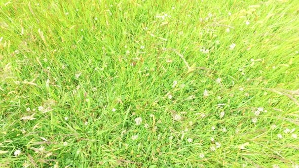 Thumbnail for Clover And Grass Growing On Meadow Or Field 48
