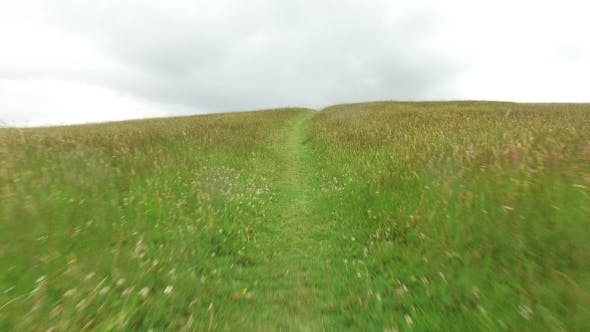 Summer Field And Path 60