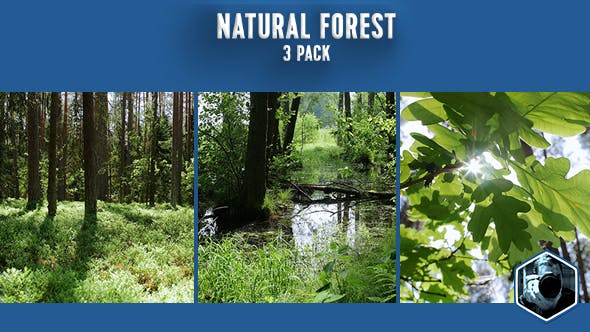 Thumbnail for Natural Forest 3-pack