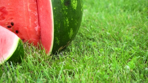 Cover Image for Sliced Watermelon On Grass