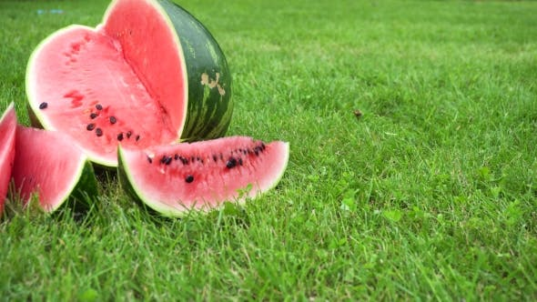 Thumbnail for Sliced Watermelon On Grass
