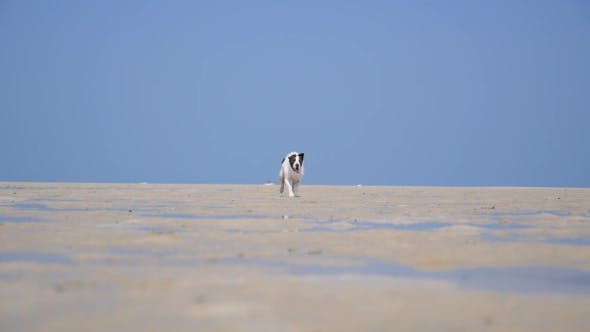 Thumbnail for Happy Dog Running at the Beach on Summer Holidays