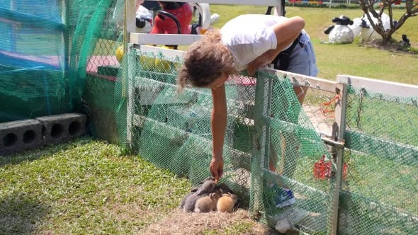 Thumbnail for Woman Feeding Baby Rabbits With Carrot In Animal Farm