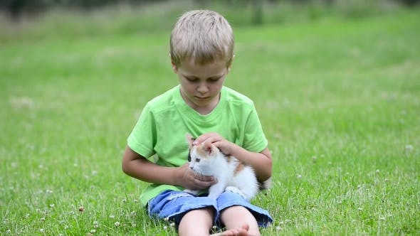 Thumbnail for Boy Playing With Kitten