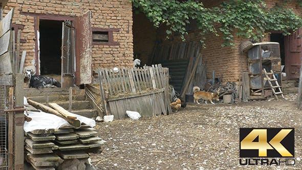 Thumbnail for Farm Animals in Village Yard
