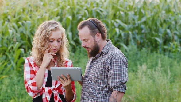 Thumbnail for Farmer Man And Woman Are Working Around The Corn Field, Use Your Tablet