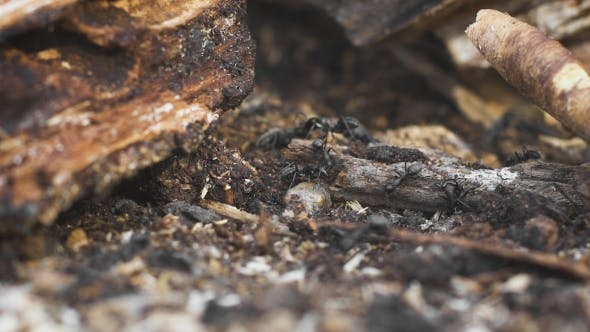 Ants On a Tree, Wild Life