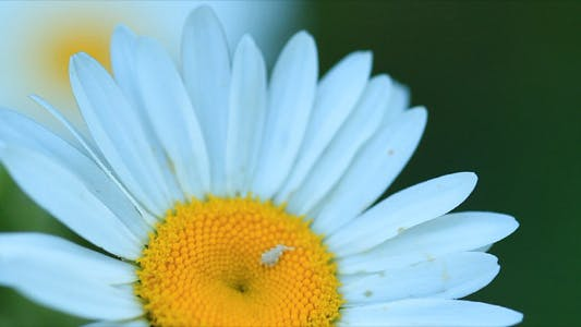 Thumbnail for Camomile Shot With Slider
