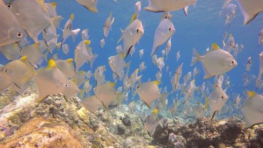 Thumbnail for Bali Underwater